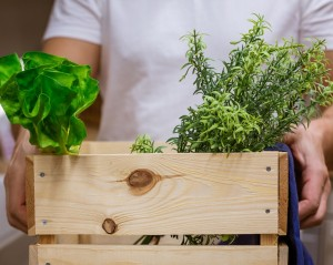 SARL : Fabrication d'emballages légers en bois pour fruits et légumes